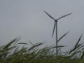 Windräder auf der Parndorfer Platte