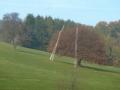 Elsbeer-Bäume