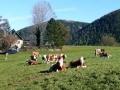 Wandern Gauermannheimat