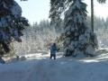 Laufen Im Märchenwald