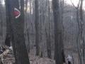 Abstieg in den Wolfsgraben