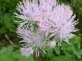 wer kennt diese Blume ?