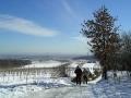 """Anstieg zum Bisamberg-""""Gipfel"""" (320 m)"""