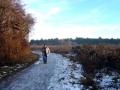 Weg durch die Lobau