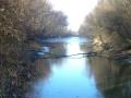 Naturschutzgebiet Toter Grund auf der Donauinse