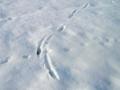 Katzenspur im Schnee