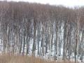 Wienerwaldstimmung am Latisberg
