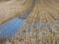 Kein Reisfeld am Fusse des Bisambergs