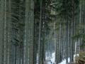 Schneeschuh Mariensee > Hochwechsel