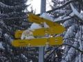 Abstieg nach Puchberg