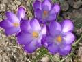 Frühling in Kobersdorf