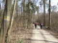 durch den Zillingdorfer Wald