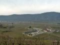 Blick vom Kellerberg auf das Weingut der Domäne Wachau