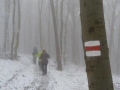 Abstieg  nach Gumpoldkirchen