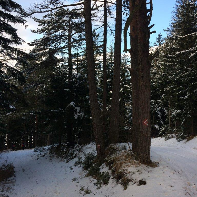 Abstieg von der Scheimhütte