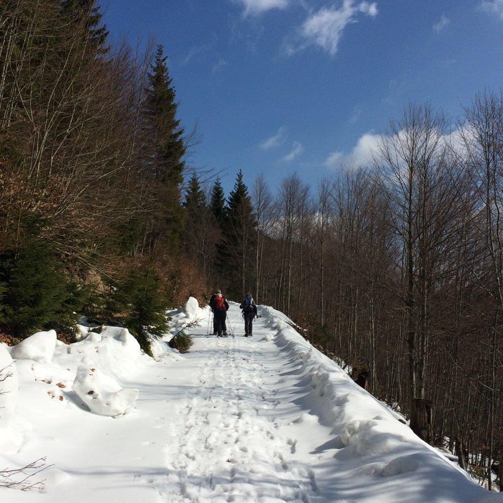Forststraße zur Sulzrieglalm
