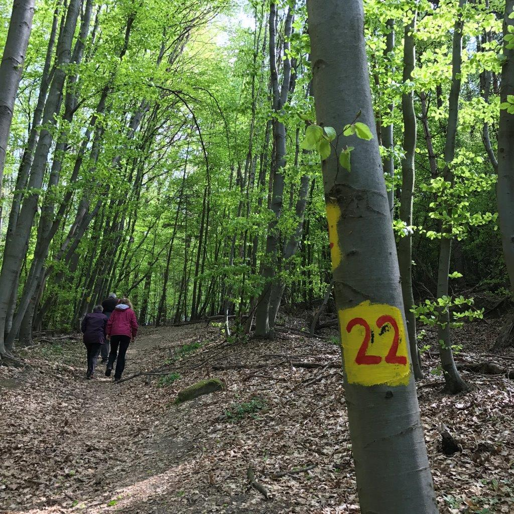 Weg 22 zum Scheiblingstein