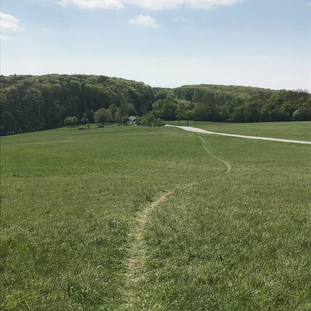 Abstieg vom Tulbinger Kogel