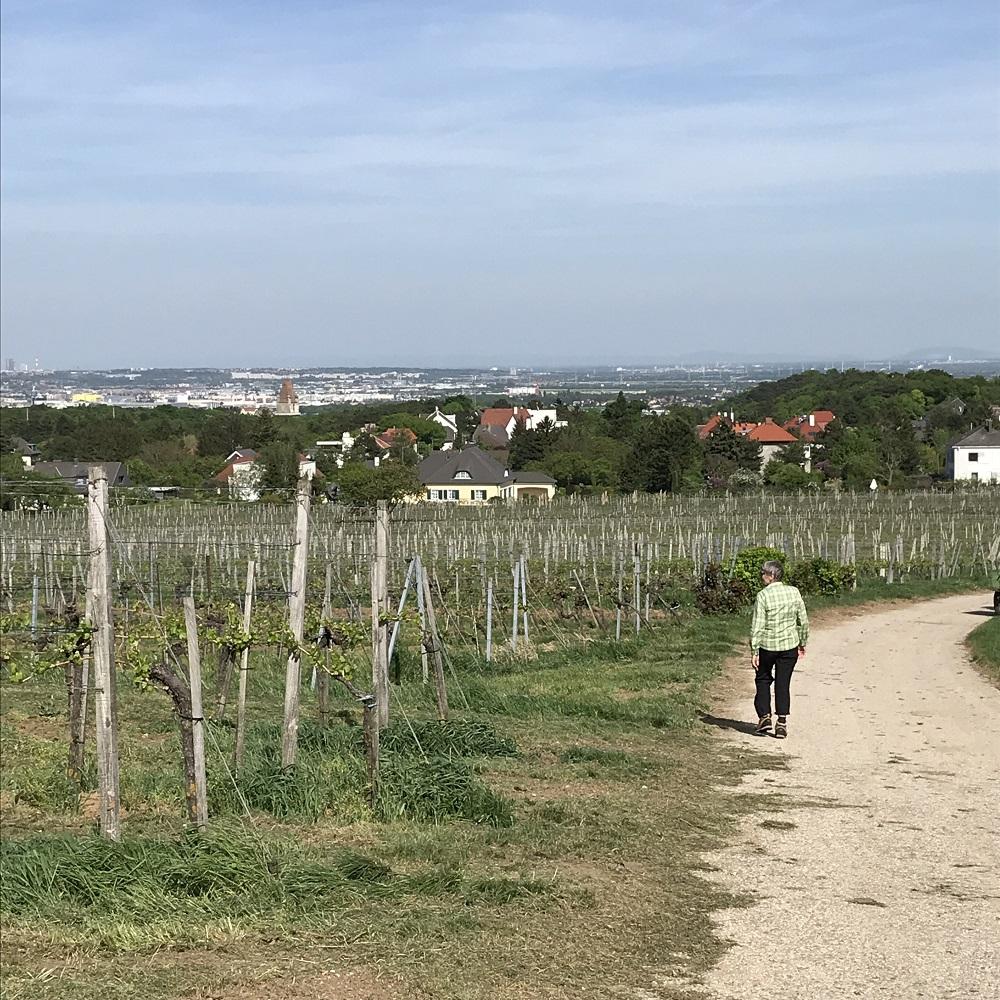 Perchtoldsdorf in Sicht