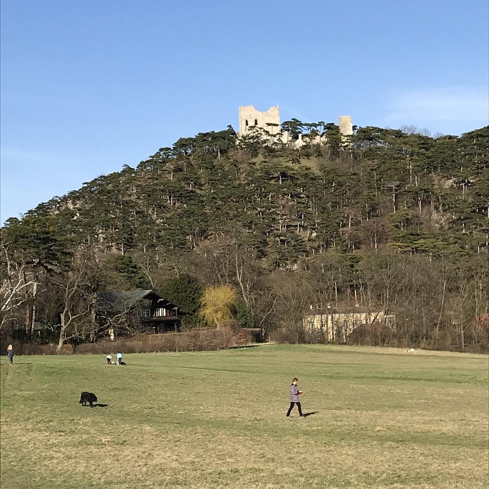 Meiereiwiese mit der Burg Mödling
