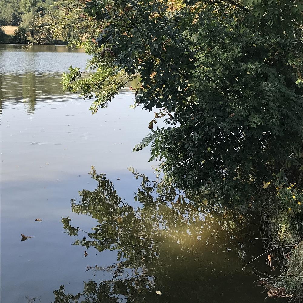 Hohenauer Teich