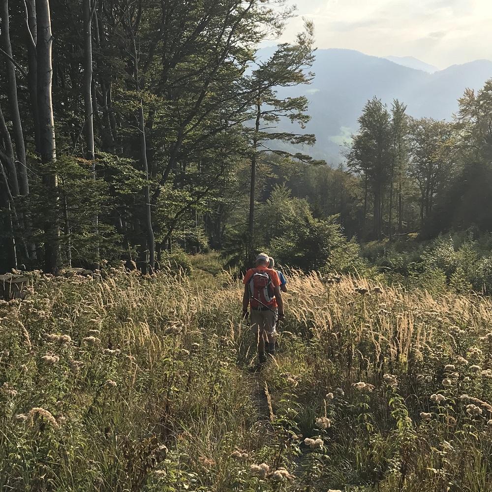 Abstieg nach Schwarzenbach/Pielach