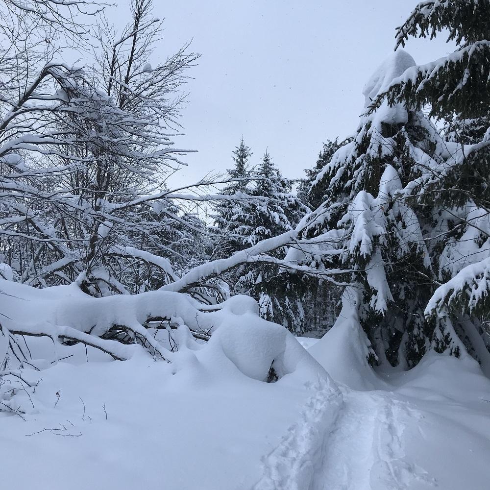 Rückweg zur Zdarskyhütte