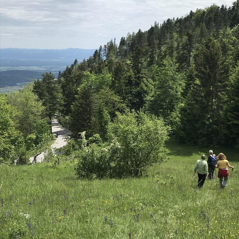 Abstieg zur Hohe-Wand-Straße