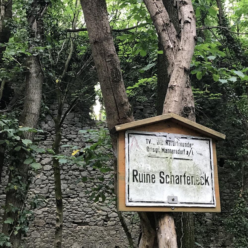 Ruine Scharfeneck