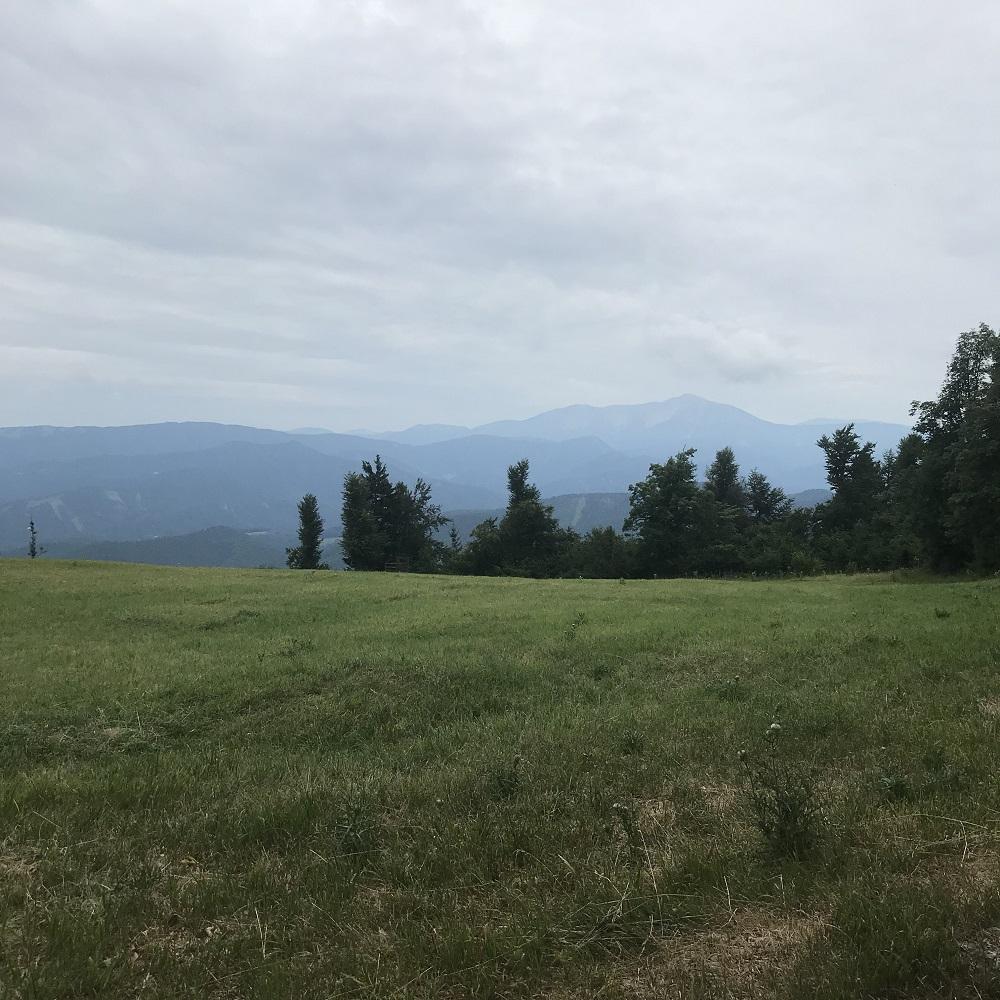 Blick von der Gipfelwiese zum Schneeberg