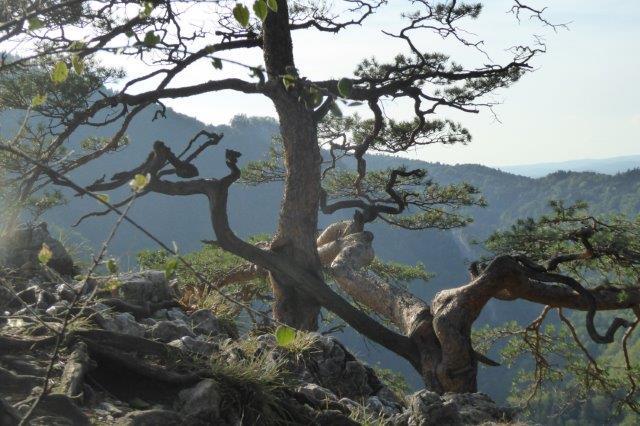 Nationalpark-Pieninen