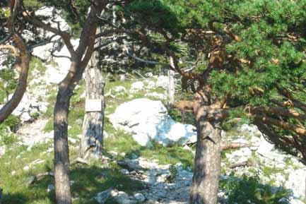 Klettersteig Traunstein : Naturfreundesteig traunstein oÖ angelos touren