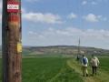.... Weitwanderwegmarkierung Richtung Großhöflein