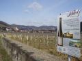 Weingärten in Joching