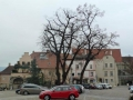 Ende der Tour am Hohen Markt in Krems
