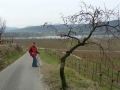 durch Weingärten Richtung Rothenhof