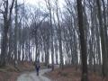 Weg zum Leopoldsberg