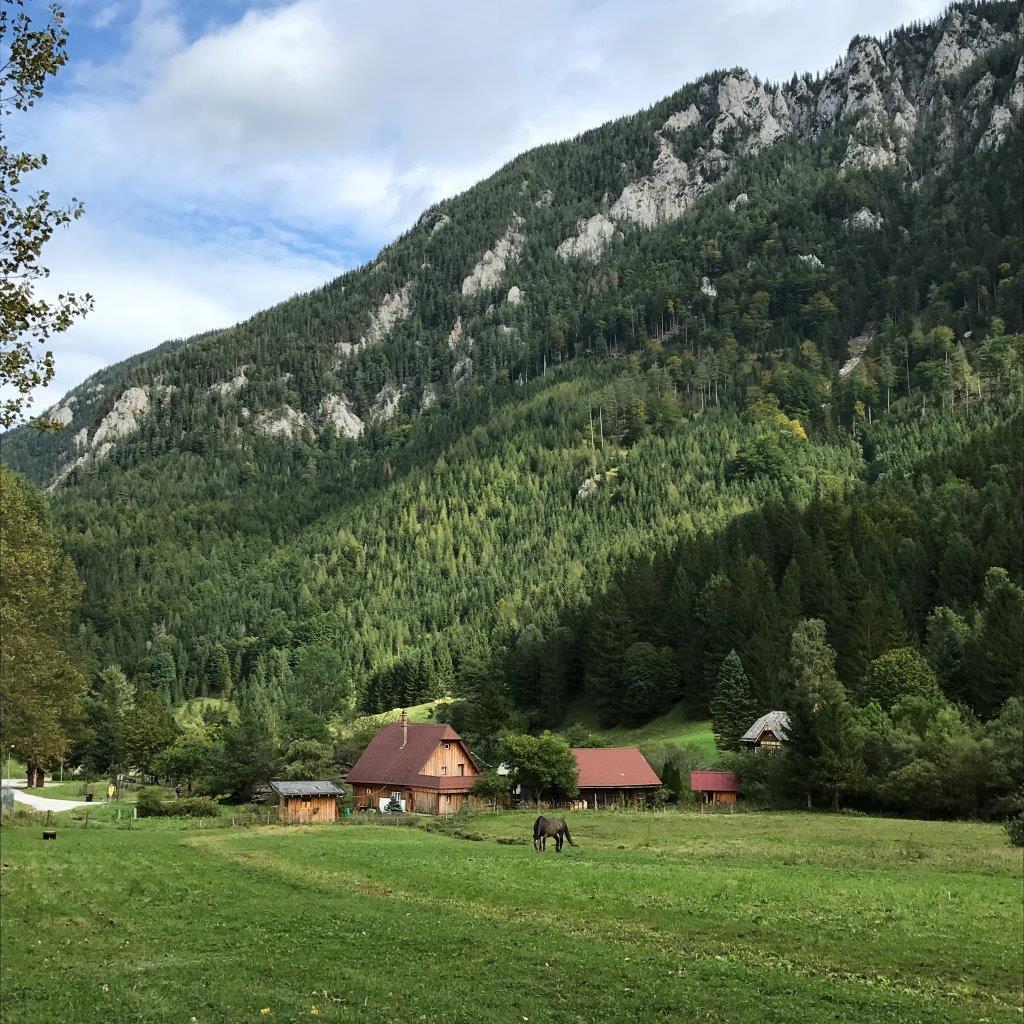 Hinternaßwald