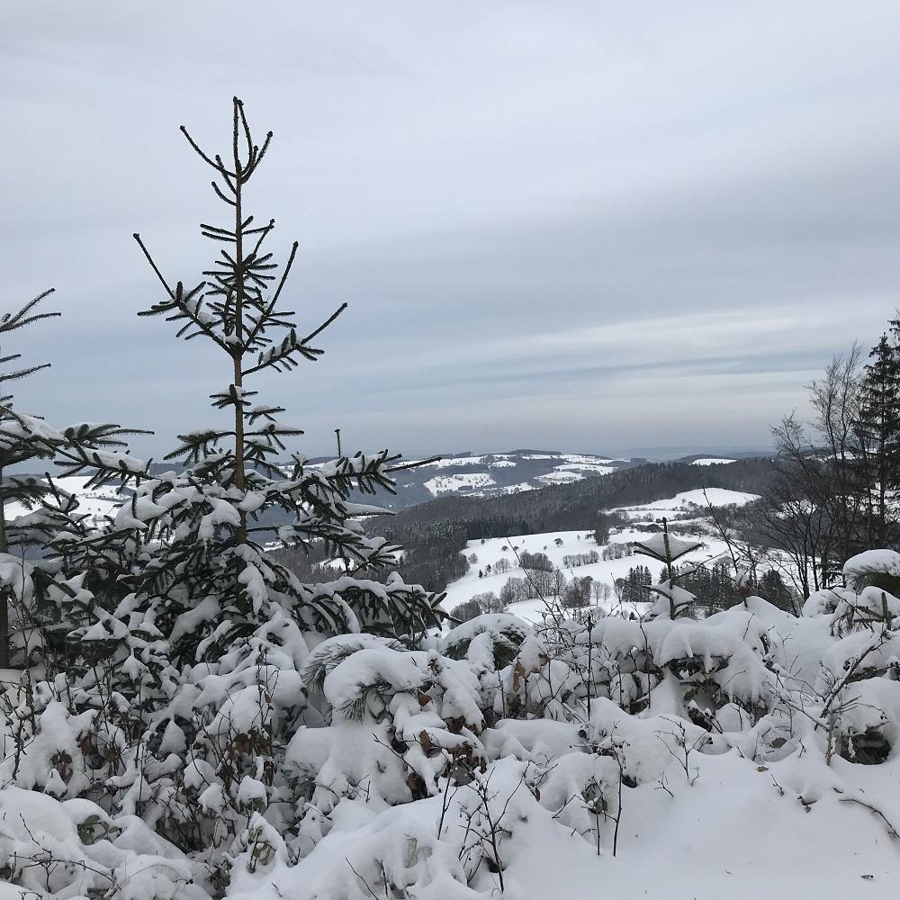 Blick von der Steinwandleiten nach Norden